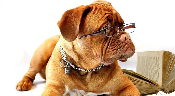 optik inspektor fertiglesebrille nahbrille reading glasses dog hung